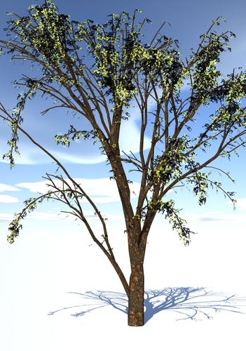 tree-ipad.jpg